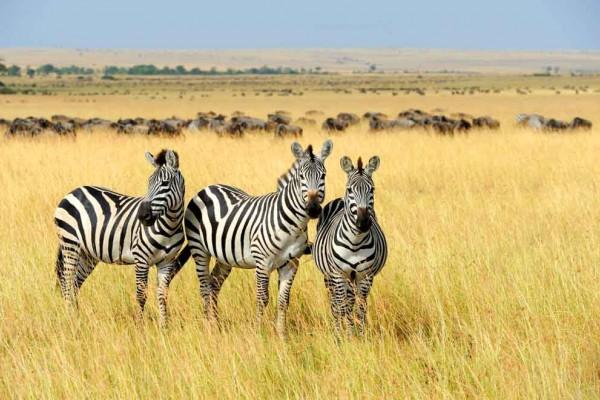 Viaggio in Sudafrica, le tappe da non perdersi tra safari e cultura